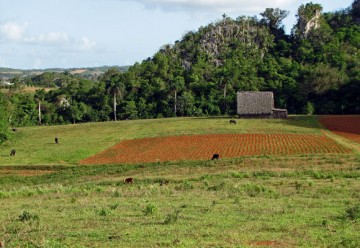 New Course Profile: LFS 302A – International Field Studies in Sustainable Agriculture – Cuba