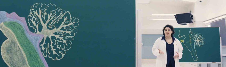 Screen grab from Neuroanatomy video series
